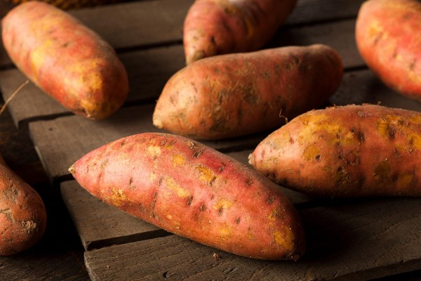 Off grid living: Grow 25 pounds of sweet potatoes in a bucket